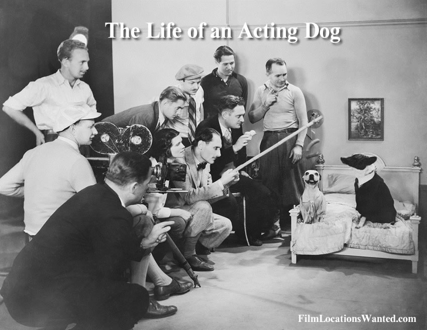 life of an acting dog