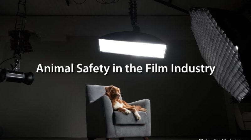 Animal Safety in the Film Industry