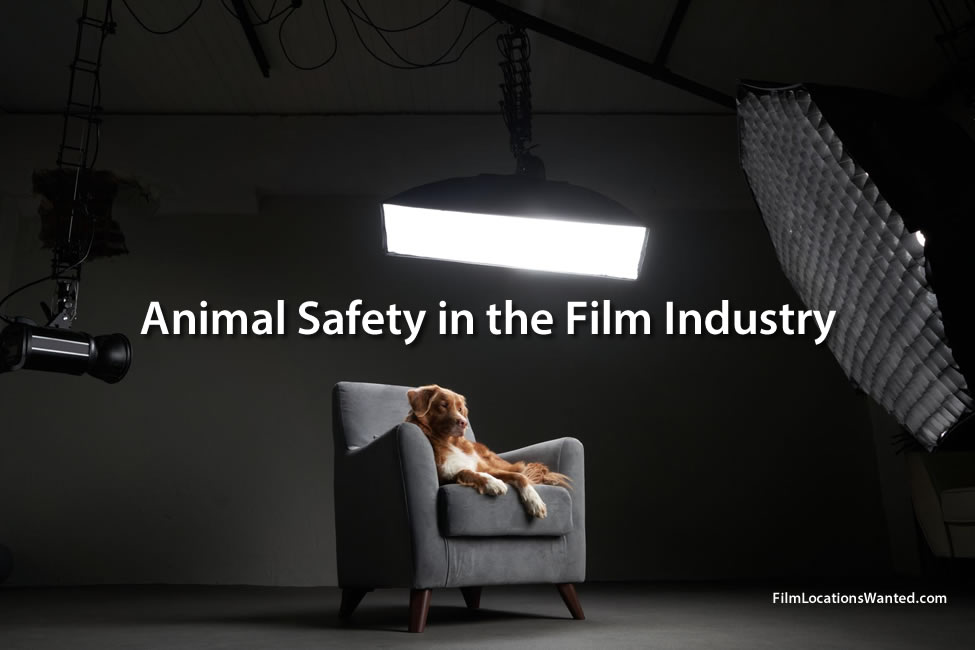 Animal Safety in the Film Industry. American Humane